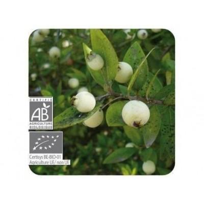 Mirtilo Verde Aceite Esencial Natural BIO Quimiotipado de Pranarôm Pranarom 222435 Acéites esenciales salud.bio