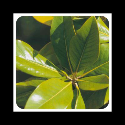 Naranjo Amargo (Hoja) Aceite Esencial Natural Quimiotipado de Pranarôm Pranarom 227230 Acéites esenciales salud.bio