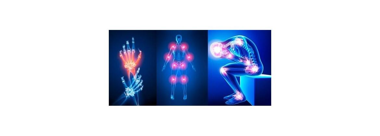 articulaciones huesos tendones