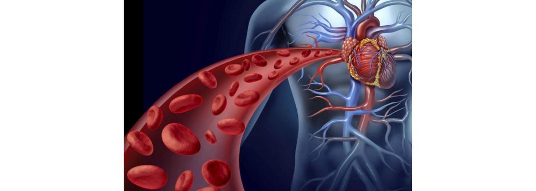 Combate las afecciones del sistema circulatorio con complementos naturales